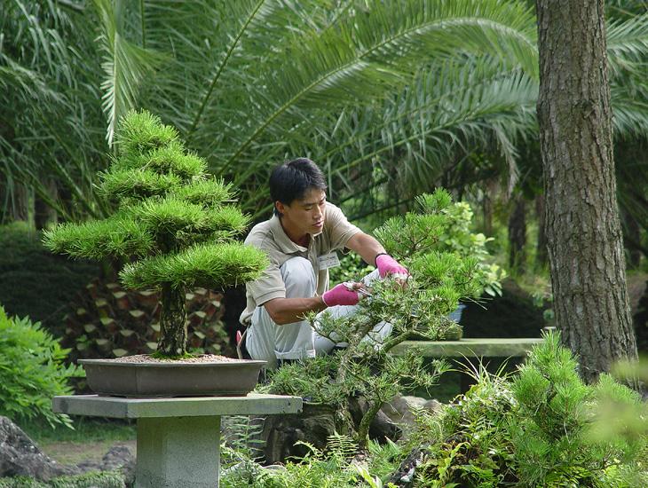 Виртуальные сады (2)